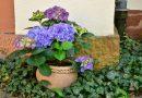 5 pomysłów na odświeżenie terenu wokół domu